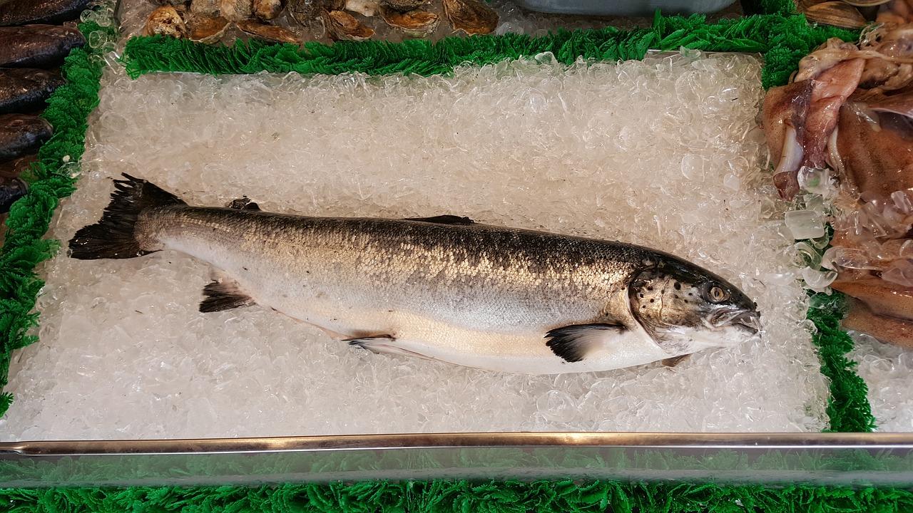 בשר דגים